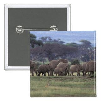Africa, Kenya, Amboseli National Park. African 3 Pinback Button