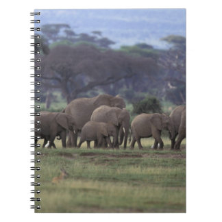 Africa, Kenya, Amboseli National Park. African 3 Notebook