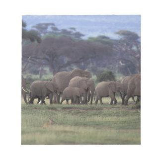 Africa, Kenya, Amboseli National Park. African 3 Notepad