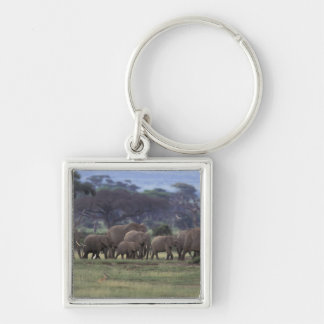 Africa, Kenya, Amboseli National Park. African 3 Silver-Colored Square Key Ring