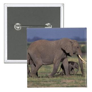 Africa, Kenya, Amboseli National Park. African 4 15 Cm Square Badge