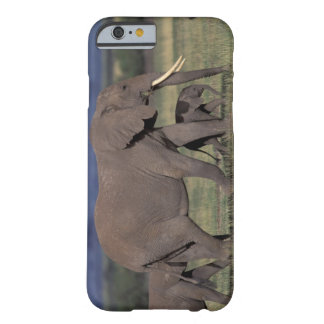 Africa, Kenya, Amboseli National Park. African 4 Barely There iPhone 6 Case