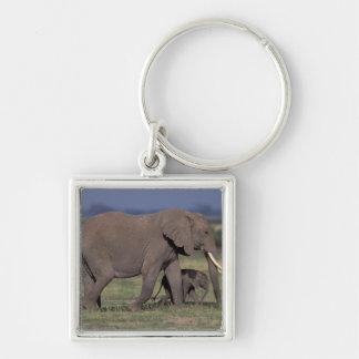 Africa, Kenya, Amboseli National Park. African 4 Key Chain