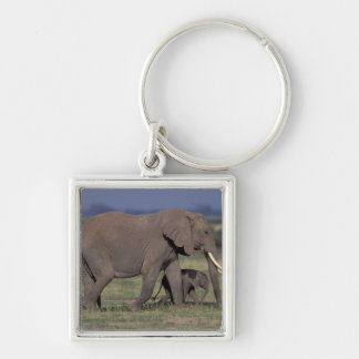 Africa, Kenya, Amboseli National Park. African 4 Silver-Colored Square Key Ring