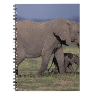 Africa, Kenya, Amboseli National Park. African 4 Spiral Notebook