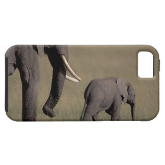 Africa, Kenya, Amboseli National Park. African iPhone 5 Cases