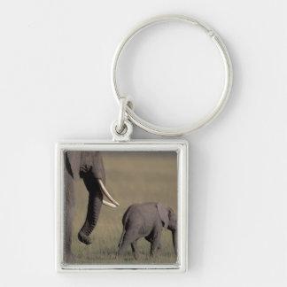 Africa, Kenya, Amboseli National Park. African Key Chain