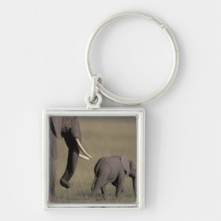 Africa, Kenya, Amboseli National Park. African Silver-Colored Square Key Ring