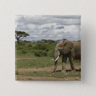 Africa, Kenya, Amboseli National Park, elephant, 15 Cm Square Badge