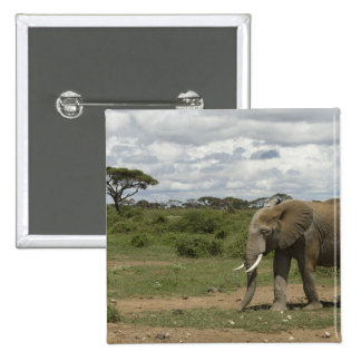 Africa, Kenya, Amboseli National Park, elephant, 15 Cm Square Badge