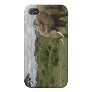 Africa, Kenya, Amboseli National Park, elephant, iPhone 4 Covers
