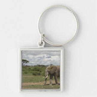 Africa, Kenya, Amboseli National Park, elephant, Silver-Colored Square Key Ring