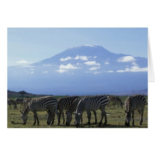 Africa, Kenya, Amboseli National Park, Herd of Greeting Cards