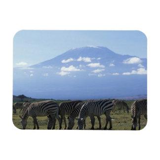 Africa, Kenya, Amboseli National Park, Herd of Rectangular Photo Magnet