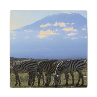 Africa, Kenya, Amboseli National Park, Herd of Wood Coaster