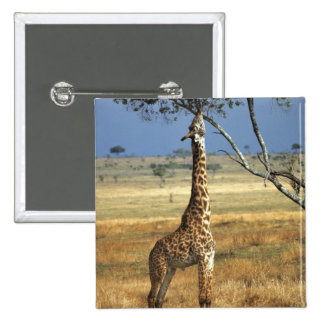 Africa, Kenya, Amboseli NP. A Common, or Masai, 15 Cm Square Badge
