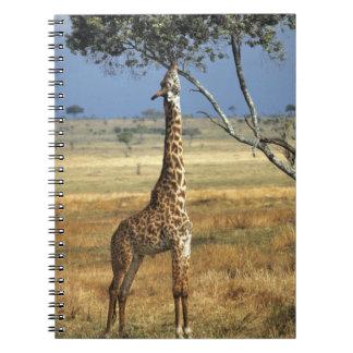 Africa, Kenya, Amboseli NP. A Common, or Masai, Notebooks