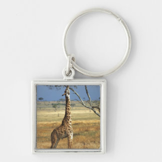Africa, Kenya, Amboseli NP. A Common, or Masai, Silver-Colored Square Key Ring