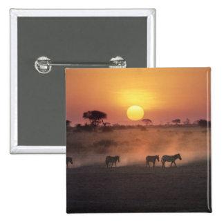 Africa, Kenya, Amboseli NP. Zebra walk to the 15 Cm Square Badge