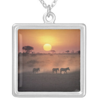 Africa, Kenya, Amboseli NP. Zebra walk to the Silver Plated Necklace