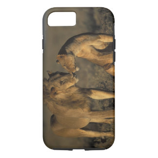 Africa, Kenya, Buffalo Springs National Reserve, iPhone 8/7 Case