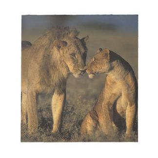 Africa, Kenya, Buffalo Springs National Reserve, Notepad