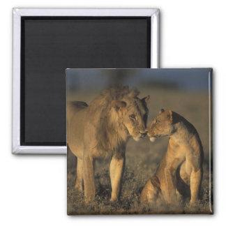 Africa, Kenya, Buffalo Springs National Reserve, Square Magnet