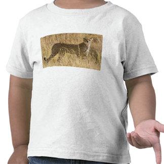 Africa. Kenya. Cheetah at Samburu NP. 2 T Shirts