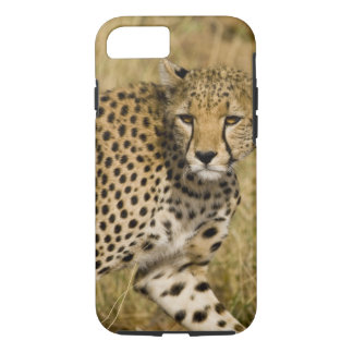 Africa. Kenya. Cheetah at Samburu NP. 3 iPhone 8/7 Case