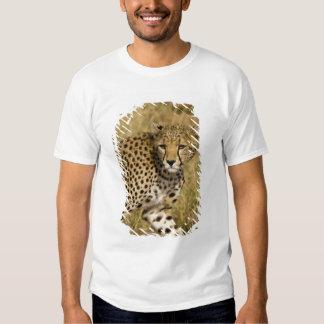 Africa. Kenya. Cheetah at Samburu NP. 3 Tee Shirts