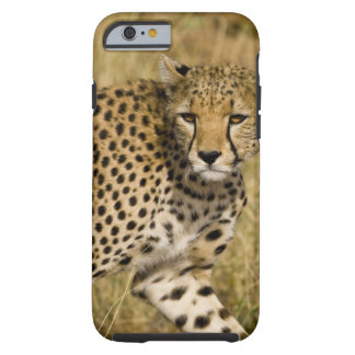 Africa. Kenya. Cheetah at Samburu NP. 3 Tough iPhone 6 Case