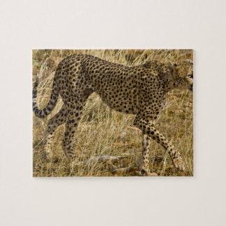 Africa. Kenya. Cheetah at Samburu NP. Jigsaw Puzzle
