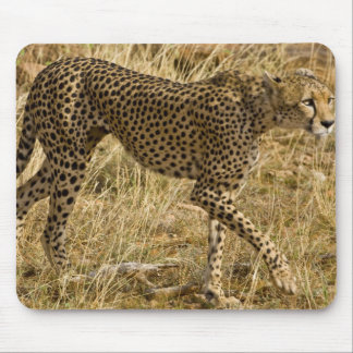 Africa. Kenya. Cheetah at Samburu NP. Mouse Mat