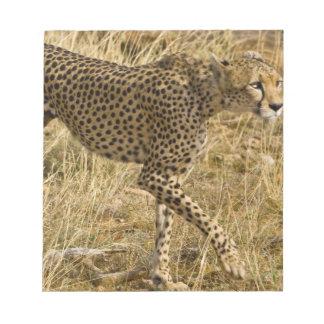 Africa. Kenya. Cheetah at Samburu NP. Notepad
