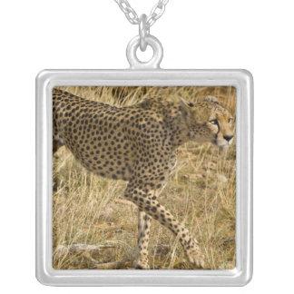 Africa. Kenya. Cheetah at Samburu NP. Silver Plated Necklace
