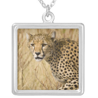 Africa. Kenya. Cheetah at Samburu NP. Silver Plated Necklace