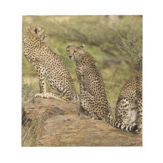 Africa. Kenya. Cheetahs at Samburu NP. 2 Notepad