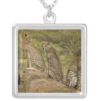 Africa. Kenya. Cheetahs at Samburu NP. 2 Silver Plated Necklace