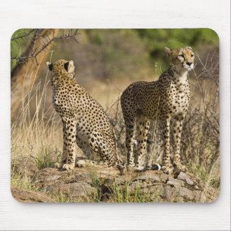Africa. Kenya. Cheetahs at Samburu NP. Mouse Mat