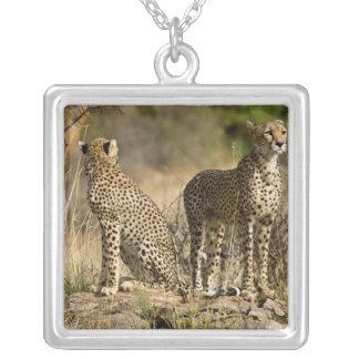 Africa. Kenya. Cheetahs at Samburu NP. Silver Plated Necklace