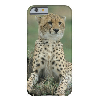 Africa, Kenya, Cheetahs Barely There iPhone 6 Case