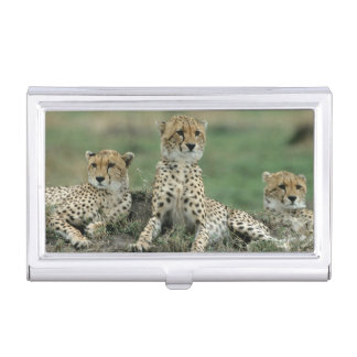 Africa, Kenya, Cheetahs Business Card Holder