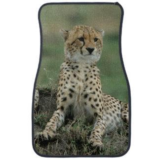 Africa, Kenya, Cheetahs Car Mat