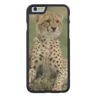 Africa, Kenya, Cheetahs Carved® Maple iPhone 6 Slim Case