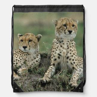 Africa, Kenya, Cheetahs Drawstring Bag