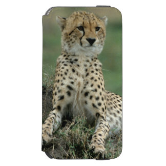 Africa, Kenya, Cheetahs Incipio Watson™ iPhone 6 Wallet Case