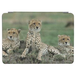 Africa, Kenya, Cheetahs iPad Air Cover
