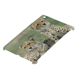 Africa, Kenya, Cheetahs iPad Mini Cases