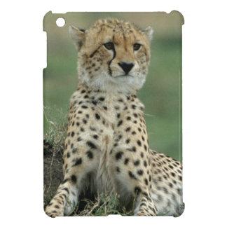 Africa, Kenya, Cheetahs iPad Mini Covers