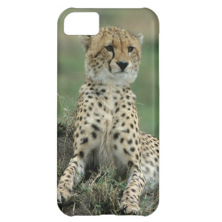 Africa, Kenya, Cheetahs iPhone 5C Case